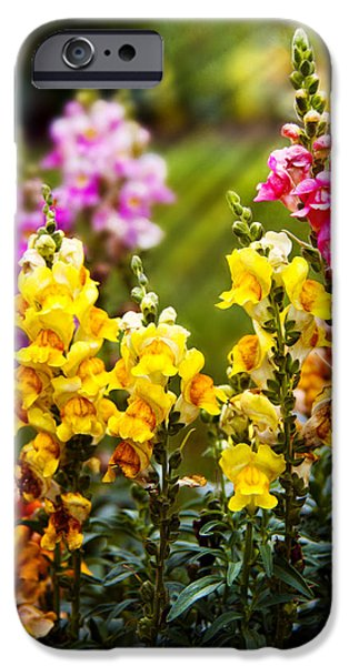 Flower - Antirrhinum - Grace iPhone Case by Mike Savad