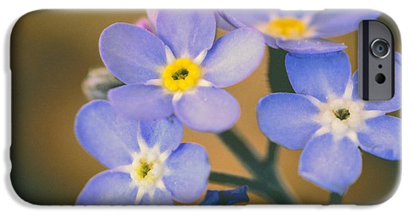 Close Focus Floral iPhone Cases - Forget Me Nots iPhone Case by Marco Oliveira