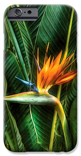Paradise. Flower Photographs iPhone Cases - Flower - Bird of paradise iPhone Case by Mike Savad
