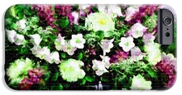 Digital Art Pastels iPhone Cases - Flower Bouquet Catus 1 no. 3 H a iPhone Case by Gert J Rheeders