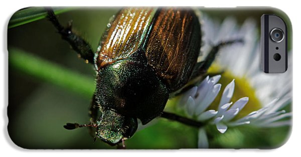 Bugs Pyrography iPhone Cases - Flower Bug iPhone Case by Matthew  Sawicki