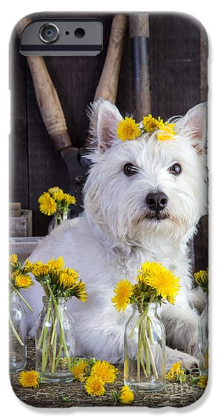 Dogs iPhone Cases - Flower Child iPhone Case by Edward Fielding