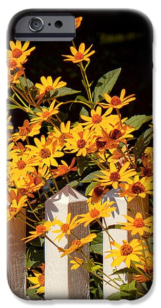Flower - Coreopsis - The warmth of Summer iPhone Case by Mike Savad