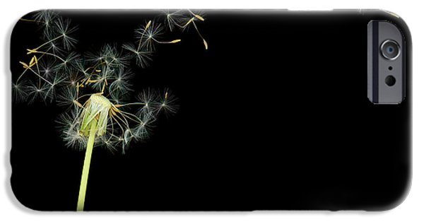 Scanography iPhone Cases - Flower - Dandelion - Gesundheit  iPhone Case by Mike Savad