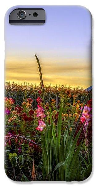 Flower farm iPhone Case by Mark Papke