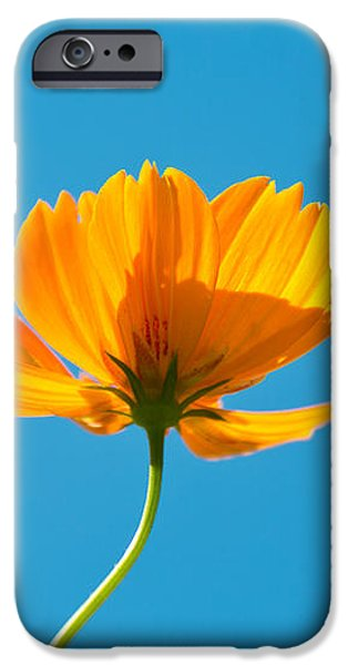Flower - Growing up in Brooklyn iPhone Case by Mike Savad