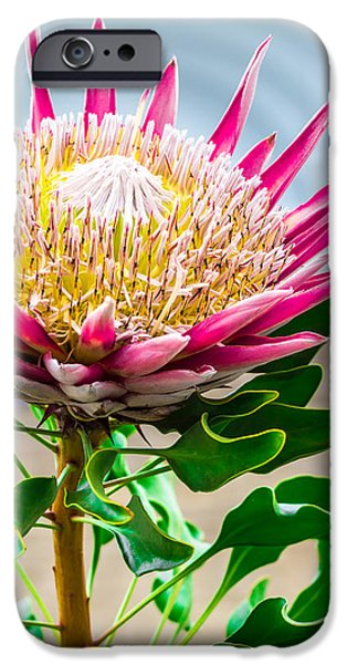 Multimedia iPhone Cases - Flower Mountain  iPhone Case by Joshua Ball