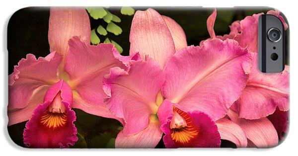 Cattleya iPhone Cases - Flower - Orchid -  Cattleya - Magenta Splendor iPhone Case by Mike Savad
