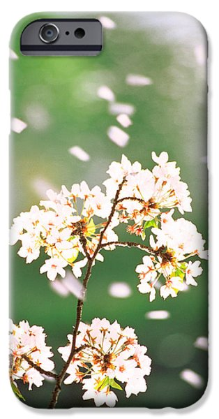 Cherry Blossoms iPhone Cases - Flower Petals Floating In Air iPhone Case by Panoramic Images