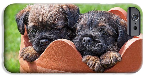 Cute Puppy iPhone Cases - Flower Pot Puppies-Border Terriers iPhone Case by Gill Billington