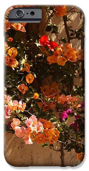 Flower Trellis in La Jolla iPhone Case by Anna Lisa Yoder