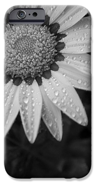 Flower Water Droplets iPhone Case by Ron White