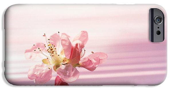 Absence iPhone Cases - Flower With Water Background iPhone Case by Panoramic Images