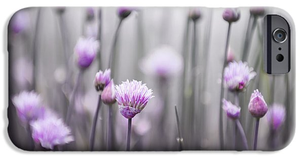 Botanical Photographs iPhone Cases - Flowering chives III iPhone Case by Elena Elisseeva