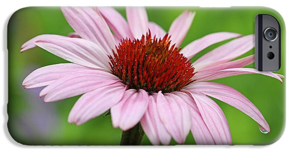 Purple Sensation iPhone Cases - Flowering Pink Coneflower iPhone Case by Juergen Roth
