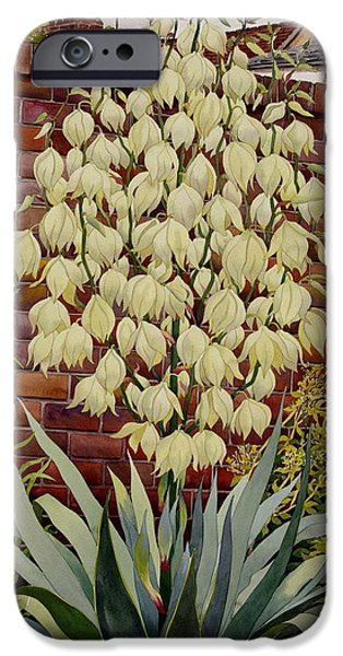 Flower Gardens Photographs iPhone Cases - Flowering Yucca Watercolour On Paper iPhone Case by Christopher Ryland