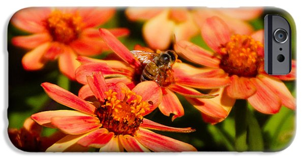 Floral Art iPhone Cases - Zinnia Flowers and Bee iPhone Case by Gloria Pasko