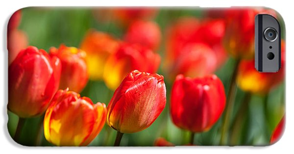 Agricultural iPhone Cases - Flowers iPhone Case by David Davis