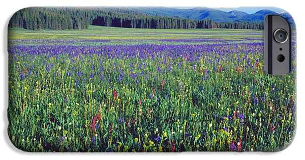 Plant iPhone Cases - Flowers In A Field, Salmon, Idaho, Usa iPhone Case by Panoramic Images