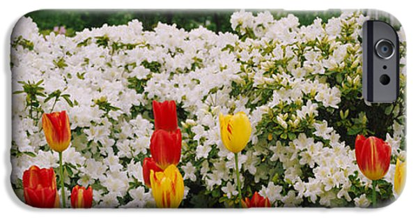 Garden Scene iPhone Cases - Flowers In A Garden, Sherwood Gardens iPhone Case by Panoramic Images