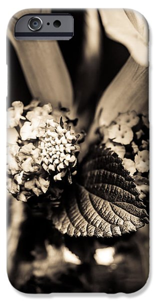 Close Focus Floral iPhone Cases - Flowers In A Jar iPhone Case by Marco Oliveira