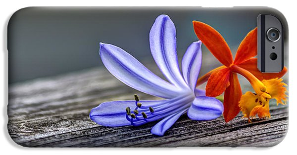 Florida Flowers Photographs iPhone Cases - Flowers of Blue and Orange iPhone Case by Marvin Spates