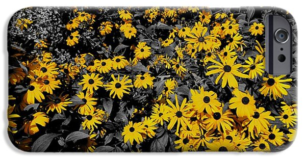 Franklin iPhone Cases - Black Eyed Susan Colors iPhone Case by Dan Sproul