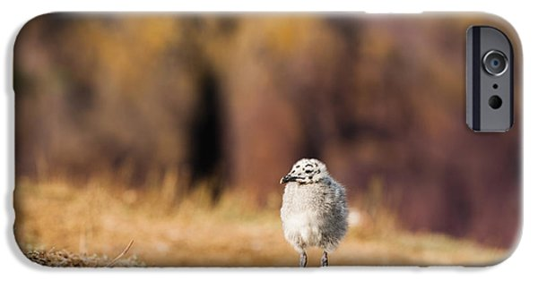 July iPhone Cases - Fluffball Watching iPhone Case by Anne Gilbert