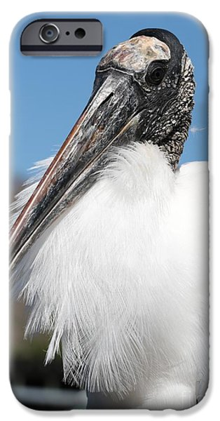Stork iPhone Cases - Fluffy Wood Stork iPhone Case by Carol Groenen
