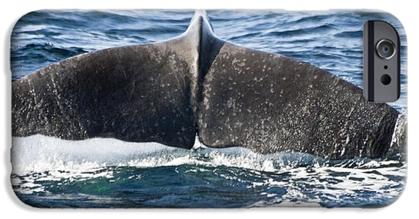 Biologic iPhone Cases - Flukes of a Sperm Whale iPhone Case by Heiko Koehrer-Wagner