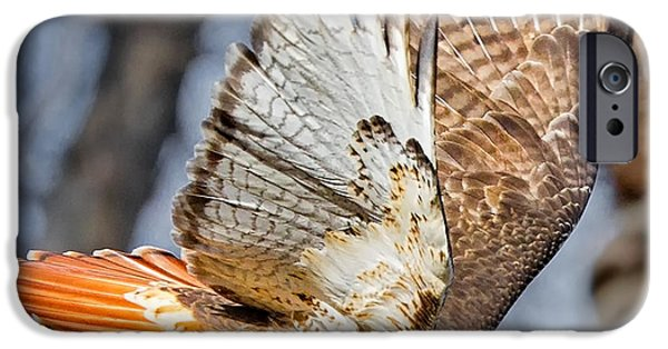 Red-tailed Hawk iPhone Cases - Fly Away iPhone Case by Bill  Wakeley