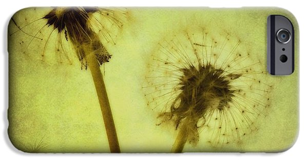 Flower Still Life iPhone Cases - Fly Away iPhone Case by Priska Wettstein