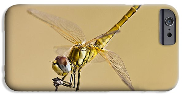 Biologic iPhone Cases - Fly Dragon Fly iPhone Case by Heiko Koehrer-Wagner