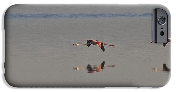 Sea Birds iPhone Cases - Fly Fly Away My Pretty Flamingo iPhone Case by Heiko Koehrer-Wagner