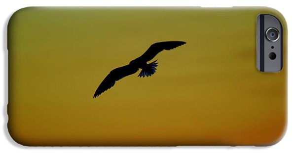 Flying Seagull iPhone Cases - Fly High Free Bird iPhone Case by Frozen in Time Fine Art Photography