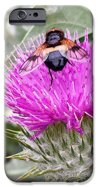 Insect Pyrography iPhone Cases - Fly on the tistle iPhone Case by Eva Ason