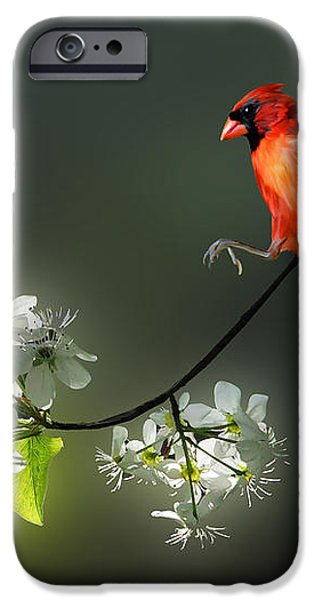 Flying Cardinal landing on branch iPhone Case by Dan Friend