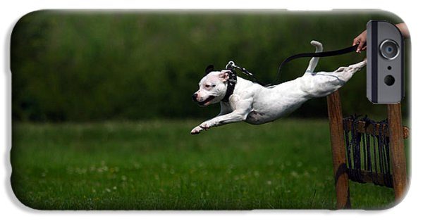 Dog In Landscape iPhone Cases - Flying dog iPhone Case by Charlie Photographer