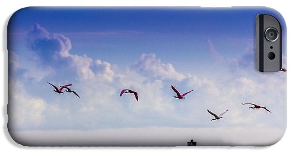 Sea Birds Photographs iPhone Cases - Flying Free iPhone Case by Marvin Spates