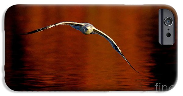 Flying Seagull iPhone Cases - Flying Gull On Fall Color iPhone Case by Robert Frederick
