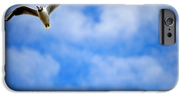 Flying Seagull Mixed Media iPhone Cases - Flying High iPhone Case by Douglas Laver