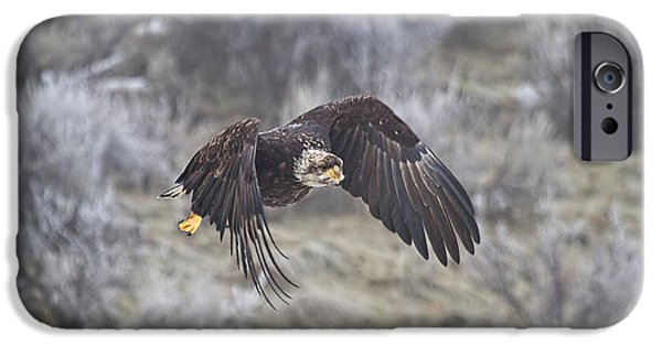 Juveniles iPhone Cases - Flying Low iPhone Case by Mike  Dawson