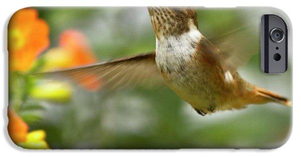 Koehrer-wagner_heiko iPhone Cases - Flying Scintillant Hummingbird iPhone Case by Heiko Koehrer-Wagner