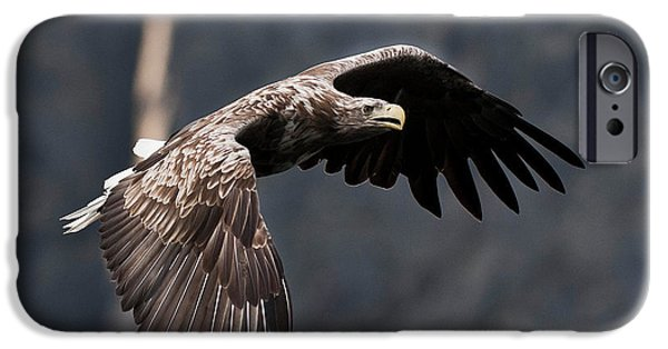Norway iPhone Cases - Flying Sea Eagle  iPhone Case by Heiko Koehrer-Wagner