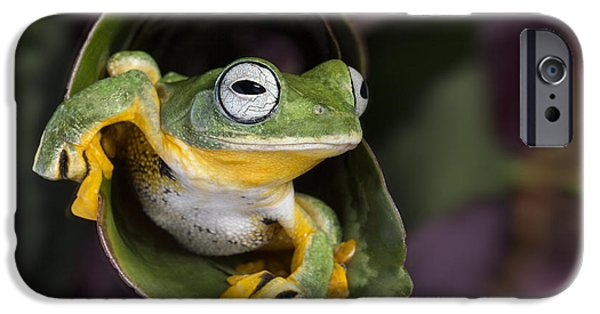 Flying Frog iPhone Cases - Flying Tree Frog iPhone Case by Linda D Lester