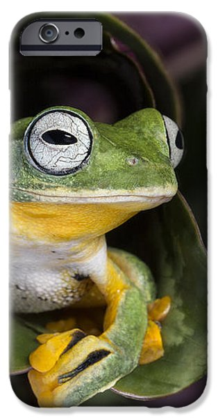 Flying Tree Frog iPhone Case by Linda D Lester