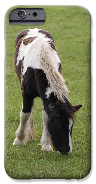 Horse Racing iPhone Cases - Foal iPhone Case by Carol Lynch