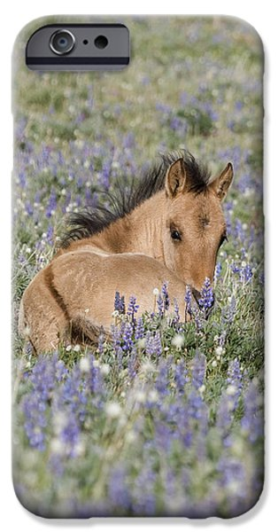 Foal in the Lupine iPhone Case by Carol Walker