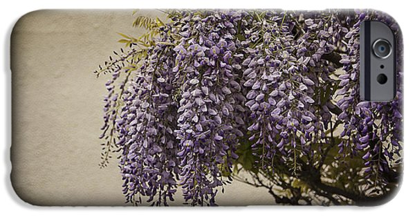 Innocence iPhone Cases - Focus on Wisteria iPhone Case by Terry Rowe