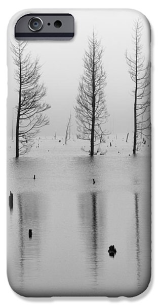 Tree Art Print iPhone Cases - Fog and Three Trees iPhone Case by Denise Bush